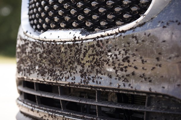 best bug and tar removers